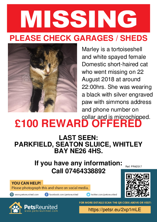 Lost pet poster - Lost cat: Tortoiseshell and white cat called Marley