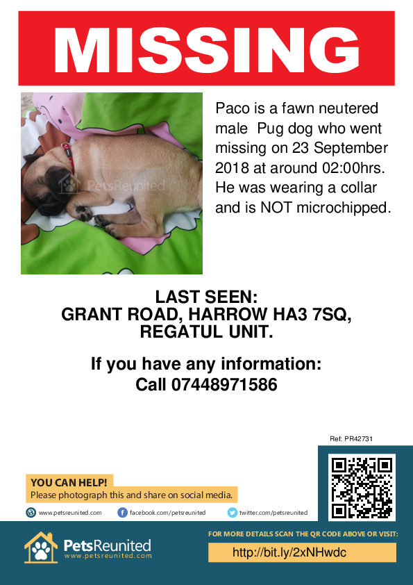 Lost pet poster - Lost dog: Fawn Pug dog called Paco
