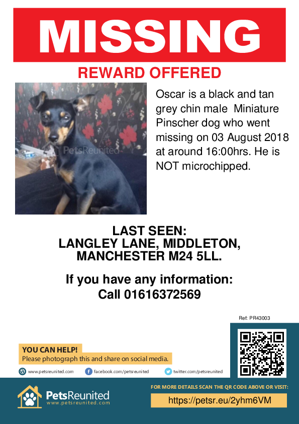 Lost pet poster - Lost dog: Black and Tan grey chin Miniature Pinscher dog called Oscar
