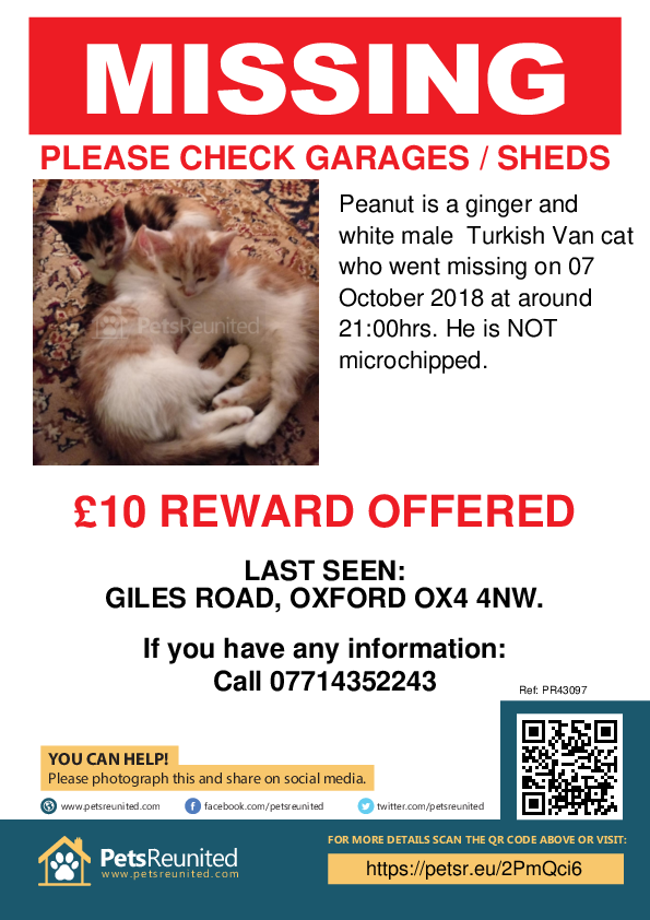 Lost pet poster - Lost cat: Ginger and White Turkish Van cat called Peanut