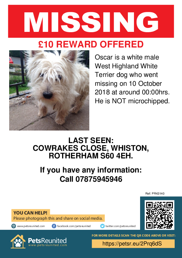 Lost pet poster - Lost dog: White West Highland White Terrier dog called Oscar
