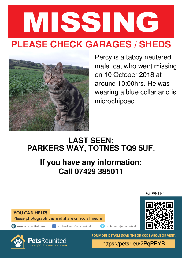 Lost pet poster - Lost cat: Tabby cat called Percy