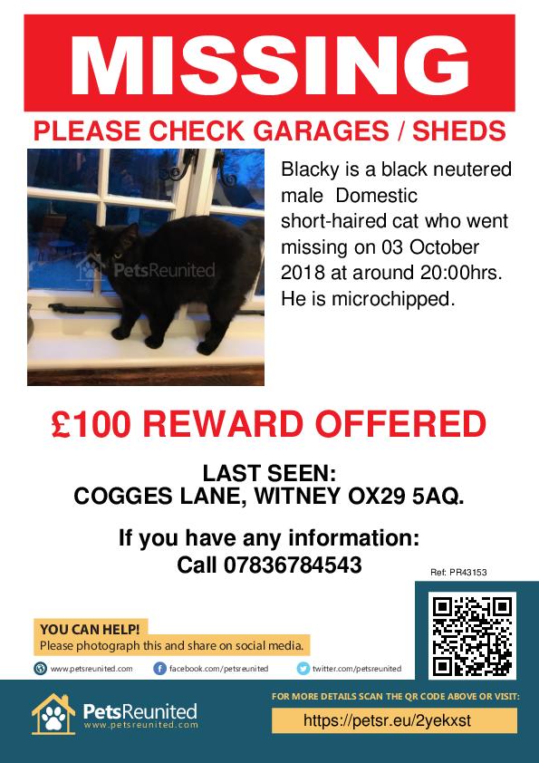 Lost pet poster - Lost cat: Black cat called Blacky