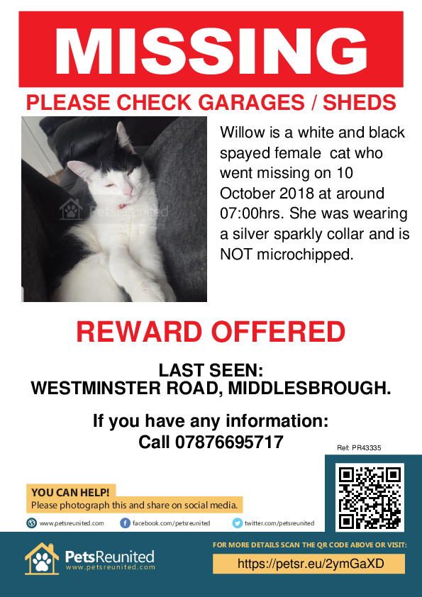 Lost pet poster - Lost cat: White and black cat called Willow