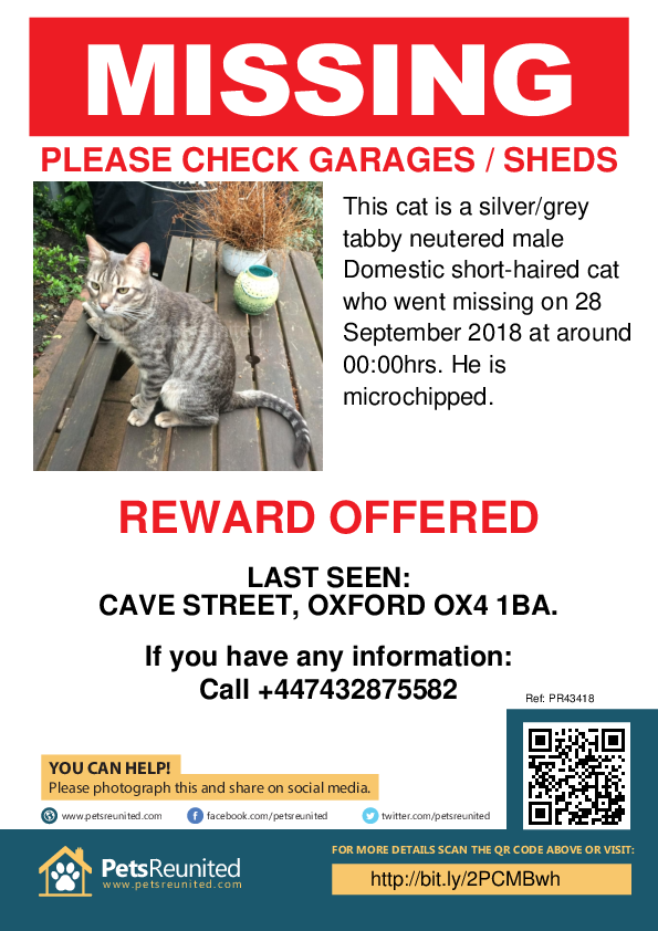 Lost pet poster - Lost cat: Silver/Grey Tabby cat [name witheld]