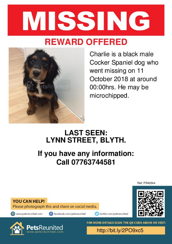 Lost pet poster - Lost dog: Black Cocker Spaniel dog called Charlie
