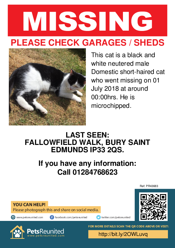 Lost cat: Black and white cat [name witheld] - Bury St