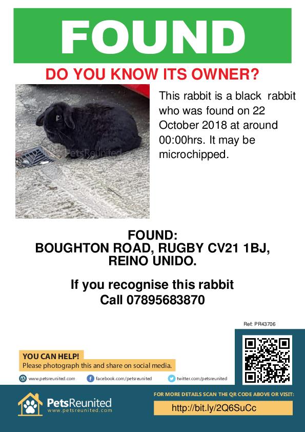 Found pet poster - Found rabbit: Black rabbit