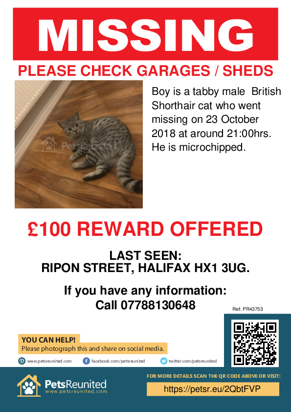 Lost pet poster - Lost cat: Tabby British Shorthair cat called Boy