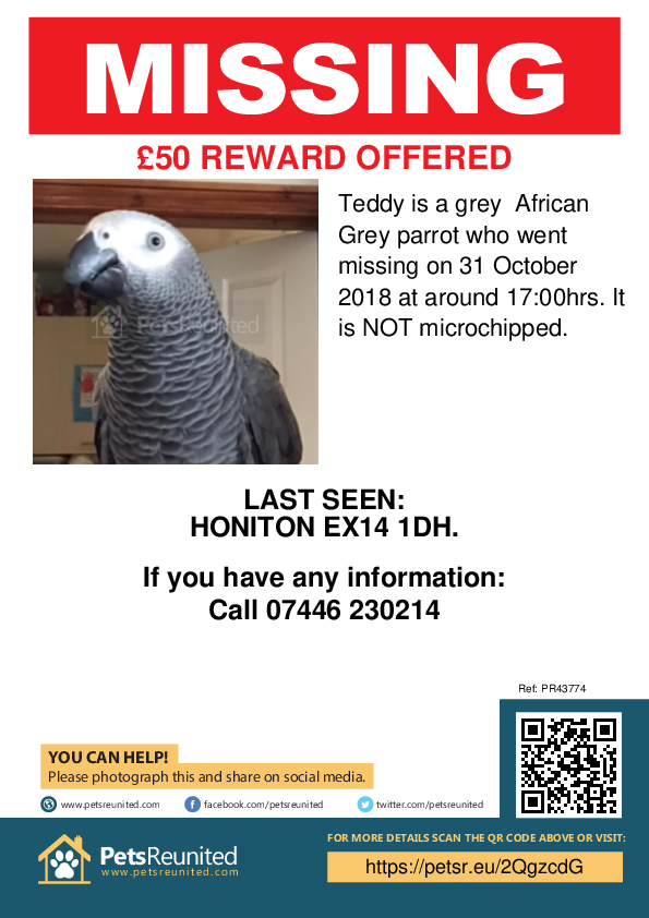 Lost pet poster - Lost parrot: Grey African Grey parrot called Teddy