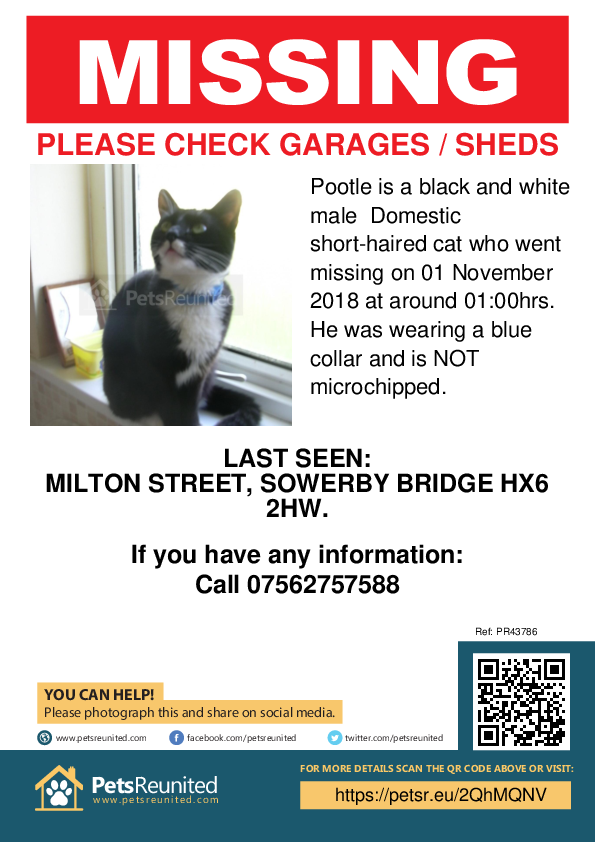 Lost pet poster - Lost cat: Black and white cat called Pootle