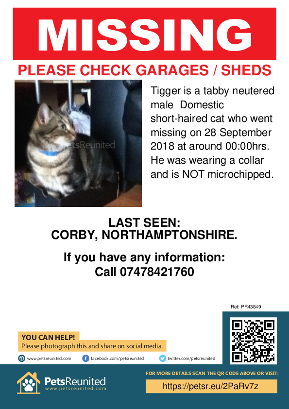 Lost pet poster - Lost cat: Tabby cat called Tigger