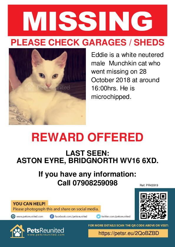 Lost pet poster - Lost cat: white Munchkin cat called Eddie