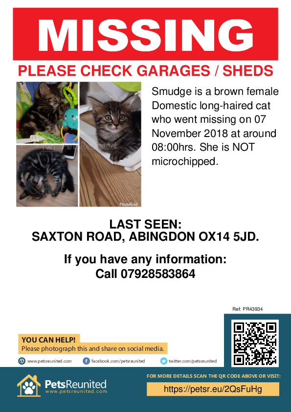 Lost pet poster - Lost cat: Brown cat called Smudge