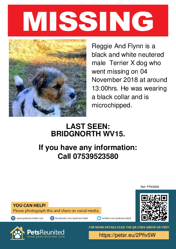 Lost pet poster - Lost dog: Black and white Terrier X dog called Reggie And Flynn