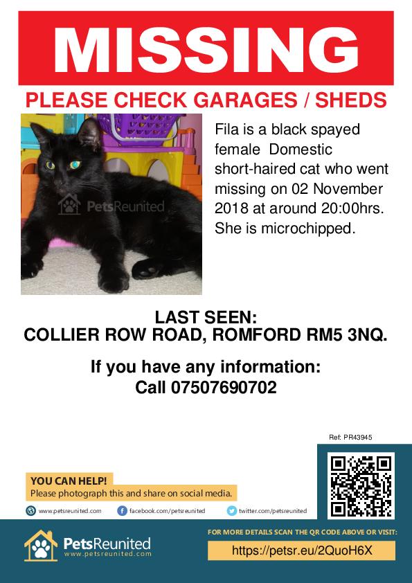 Lost pet poster - Lost cat: Black cat called Fila