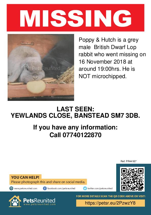Lost pet poster - Lost rabbit: Grey British Dwarf Lop rabbit called Poppy & Hutch