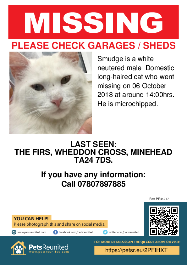 Lost pet poster - Lost cat: White cat called Smudge