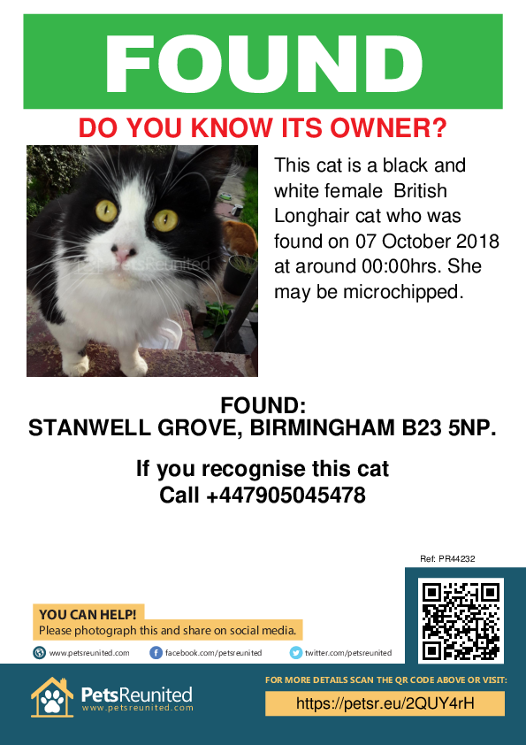 Found pet poster - Found cat: Black and white British Longhair cat