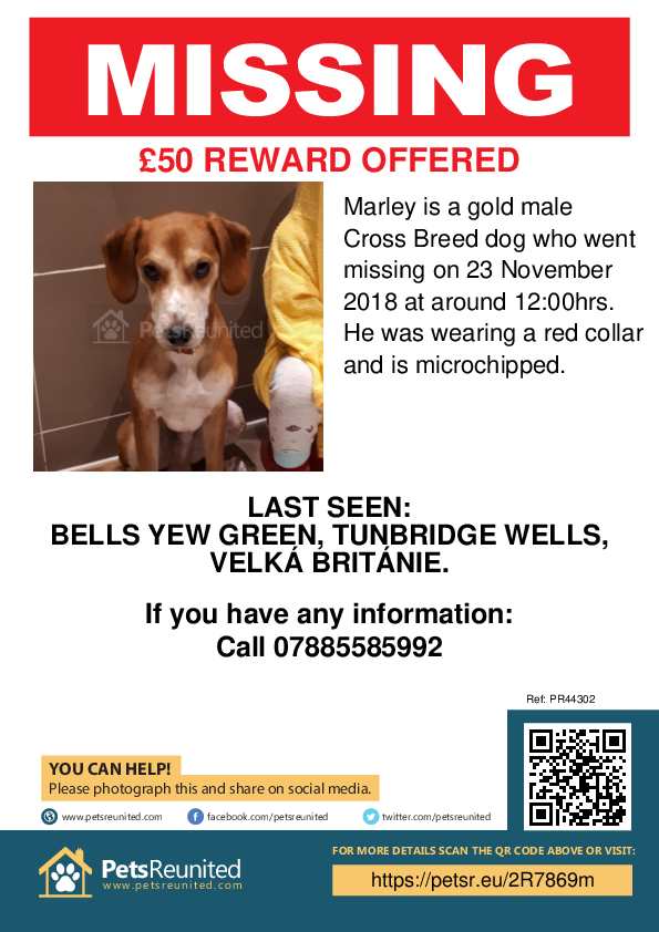 Lost pet poster - Lost dog: Gold dog called Marley