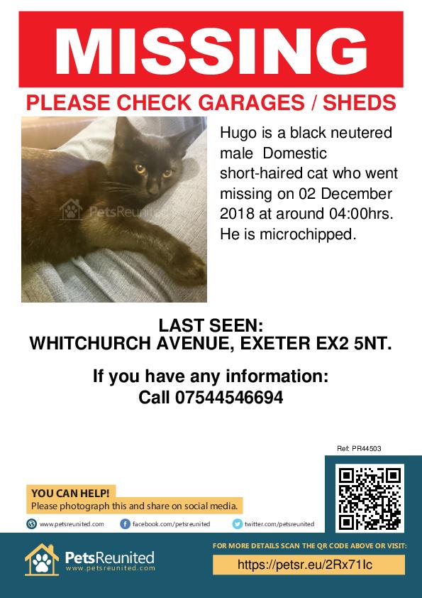Lost pet poster - Lost cat: Black cat called Hugo