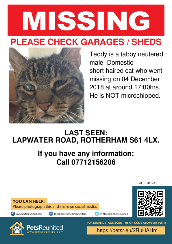 Lost pet poster - Lost cat: Tabby cat called Teddy