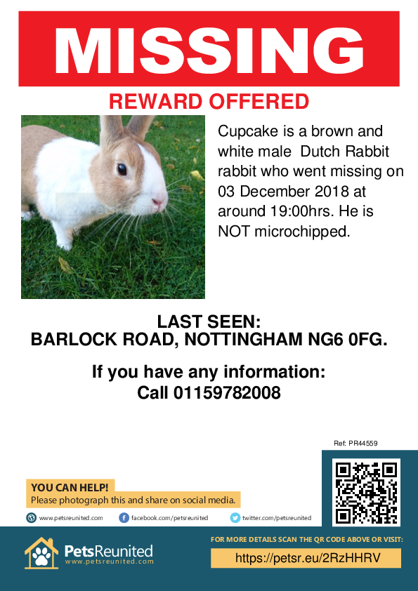 Lost pet poster - Lost rabbit: Brown and White Dutch Rabbit rabbit called Cupcake