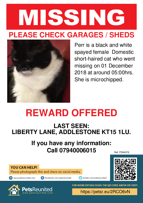 Lost pet poster - Lost cat: Black and white cat called Perr