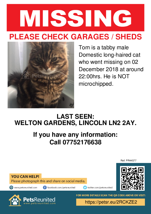 Lost pet poster - Lost cat: Tabby cat called Tom