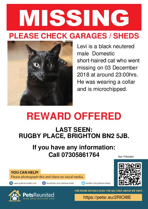Lost pet poster - Lost cat: Black cat called Levi