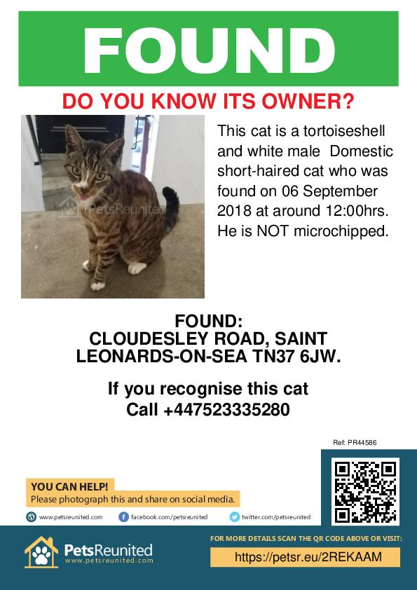 Found pet poster - Found cat: Tortoiseshell and white cat