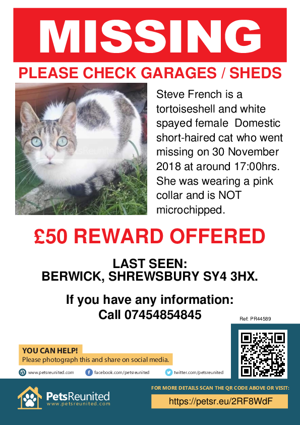 Lost pet poster - Lost cat: Tortoiseshell and white cat called Steve French