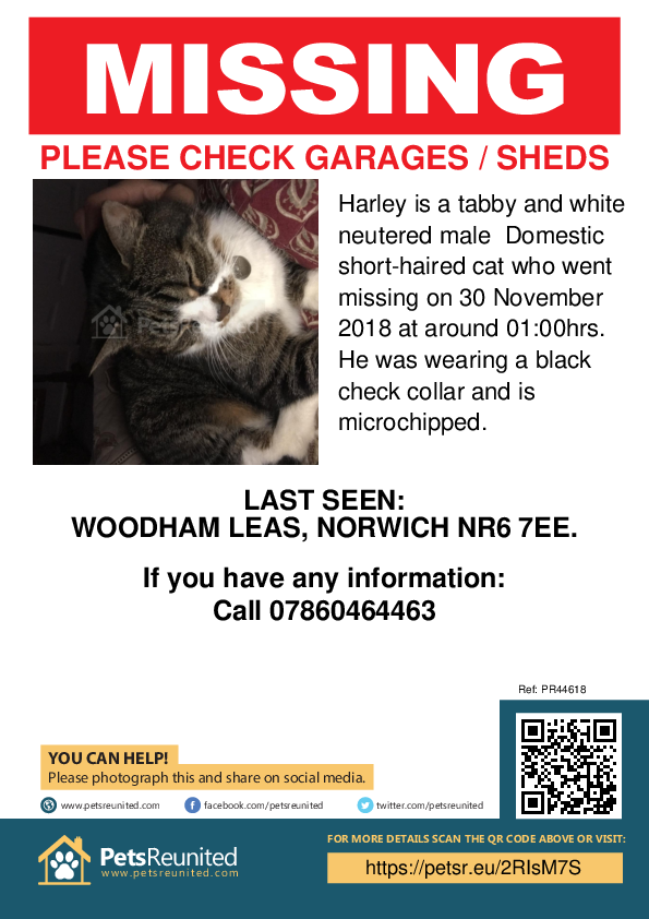 Lost pet poster - Lost cat: Tabby and white cat called Harley