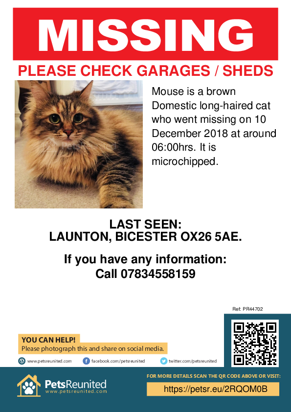 Lost pet poster - Lost cat: Brown cat called Mouse