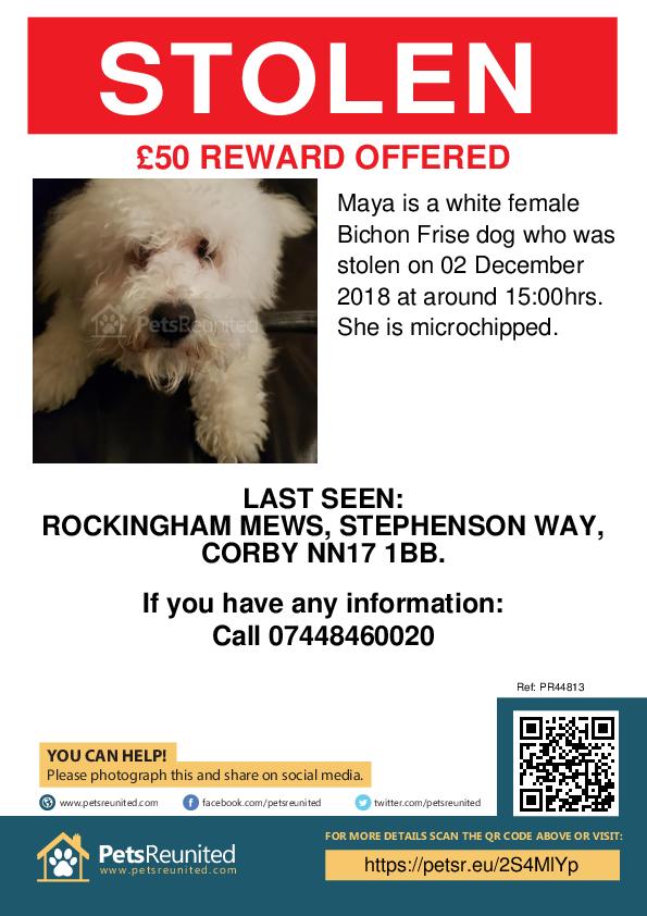 Stolen pet poster - Stolen dog: White Bichon Frise dog called Maya