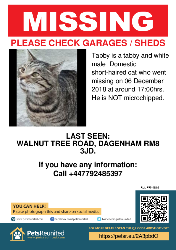 Lost pet poster - Lost cat: Tabby and white cat called Tabby