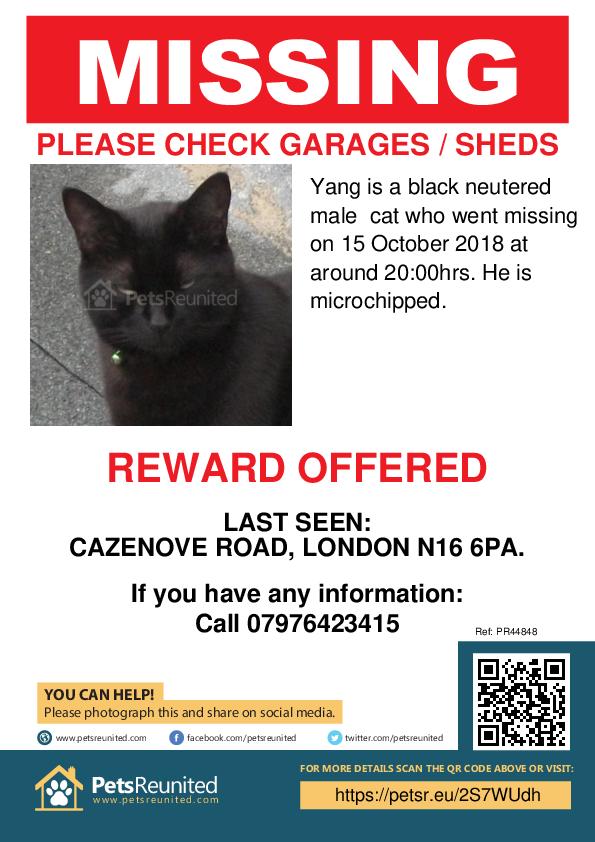 Lost pet poster - Lost cat: Black cat called Yang