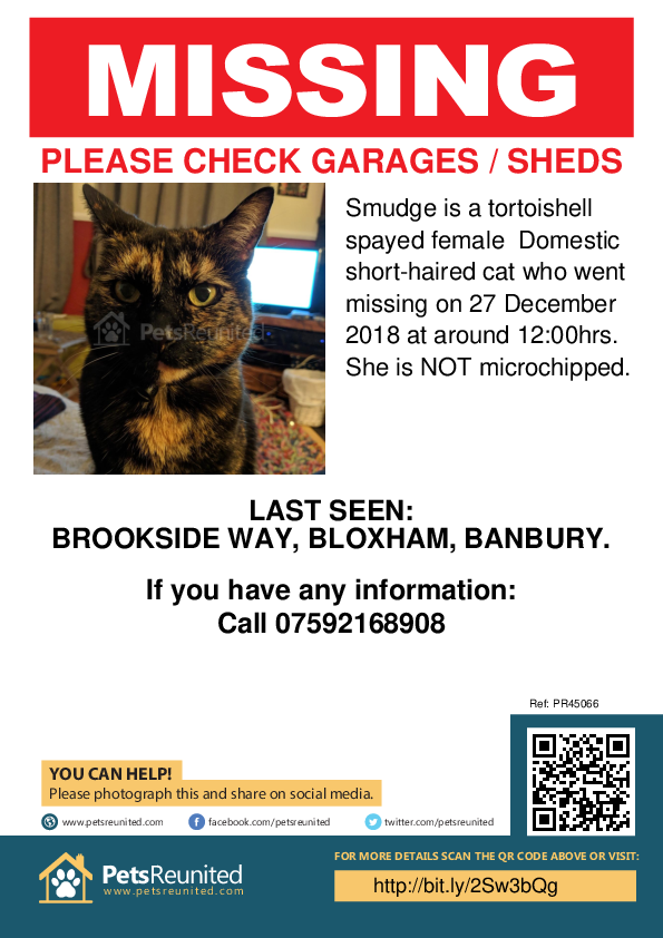 Lost pet poster - Lost cat: Tortoishell cat called Smudge