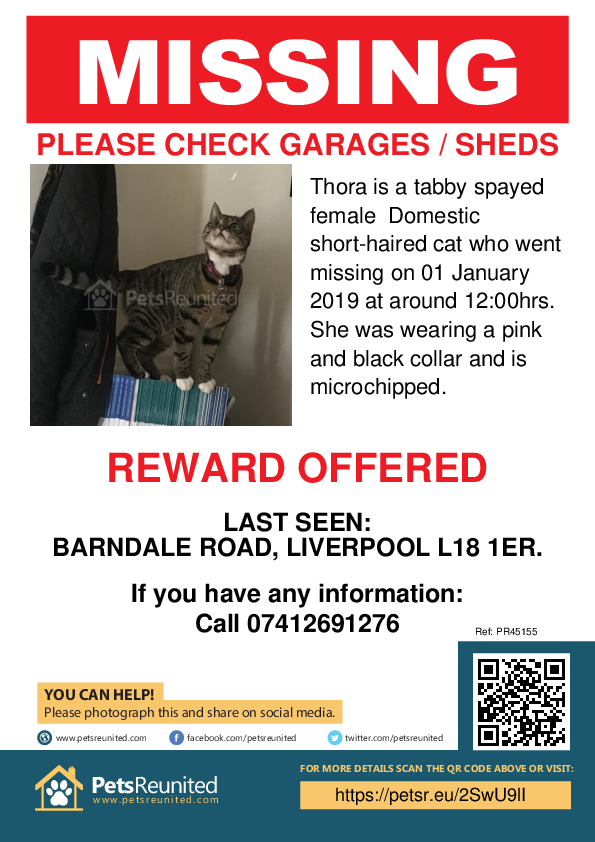 Lost pet poster - Lost cat: Tabby cat called Thora