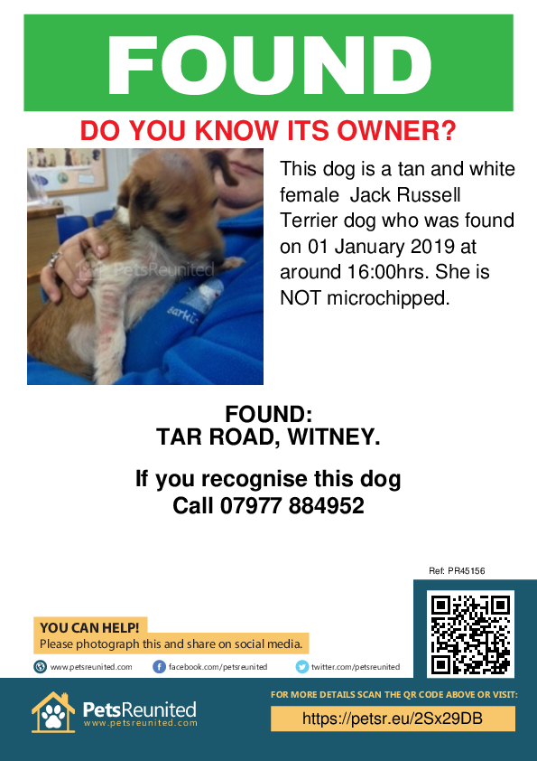 Found pet poster - Found dog: Tan and White Jack Russell Terrier dog