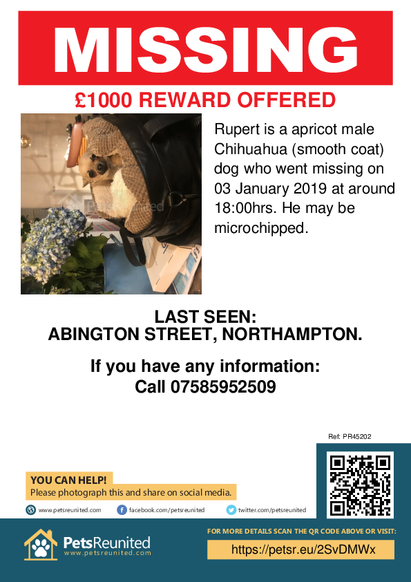 Lost pet poster - Lost dog: Apricot Chihuahua (smooth coat) dog called Rupert