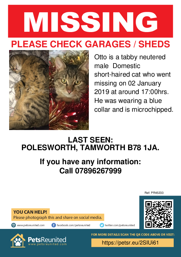 Lost pet poster - Lost cat: Tabby cat called Otto