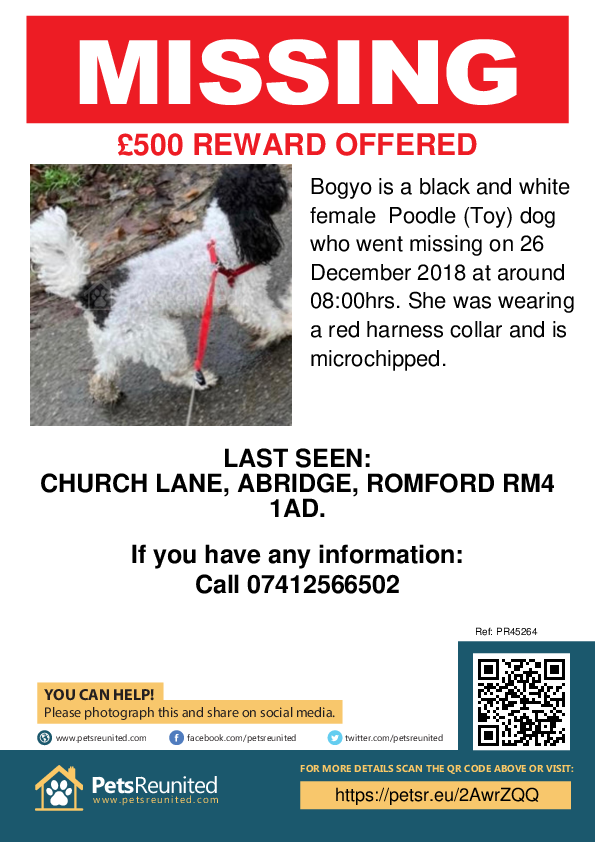 Lost pet poster - Lost dog: Black and white Poodle (Toy) dog called Bogyo