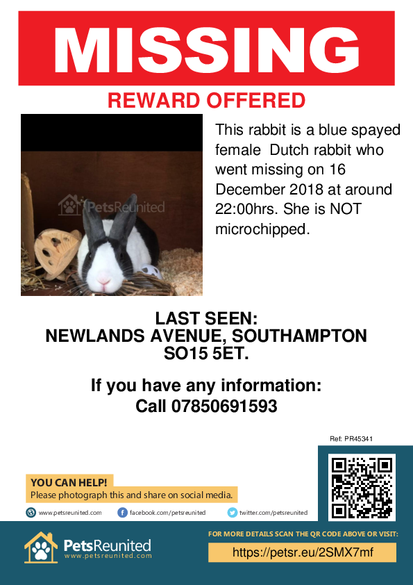 Lost pet poster - Lost rabbit: Blue Dutch rabbit [name witheld]