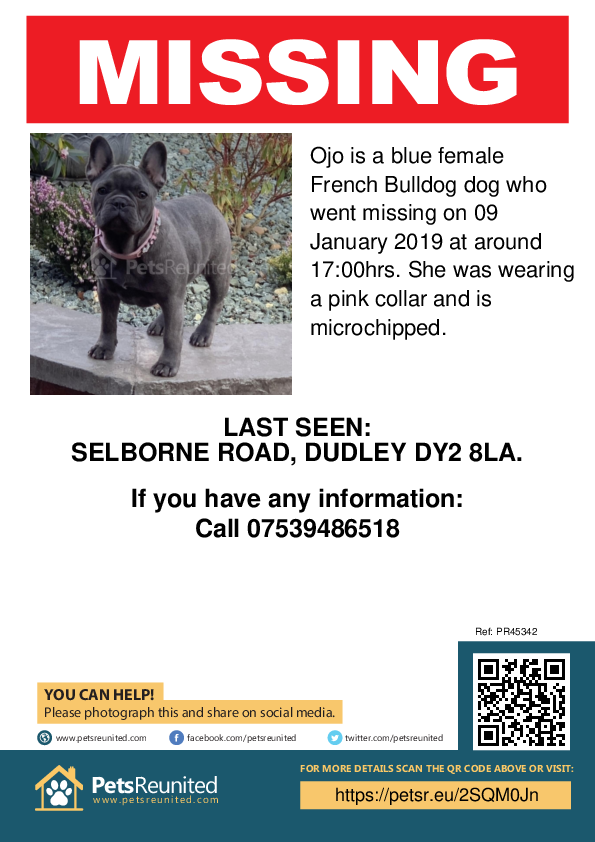 Lost pet poster - Lost dog: Blue French Bulldog dog called Ojo