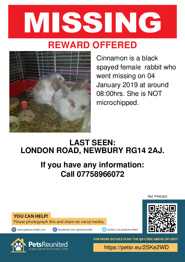 Lost pet poster - Lost rabbit: White and brown rabbit called Cinnamon