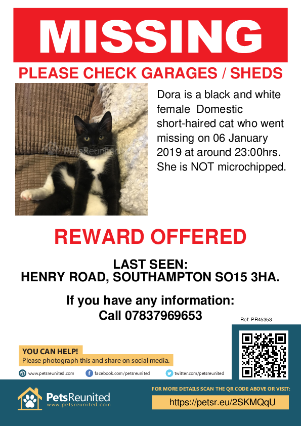 Lost pet poster - Lost cat: Black and white cat called Dora
