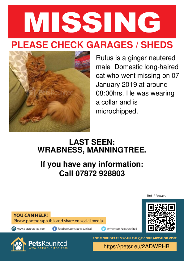 Lost pet poster - Lost cat: Ginger cat called Rufus