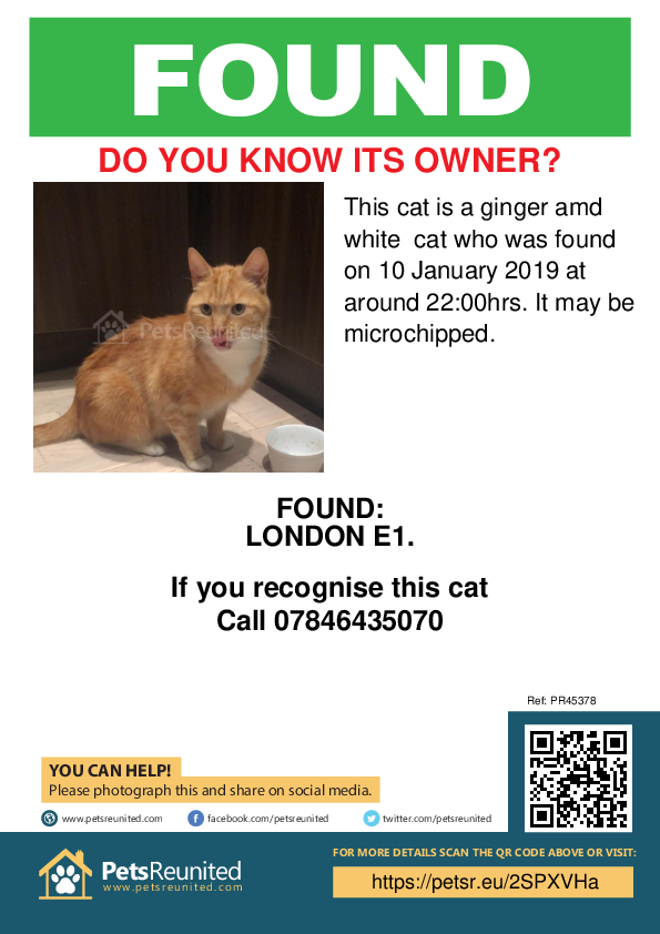 Found pet poster - Found cat: Ginger amd white cat