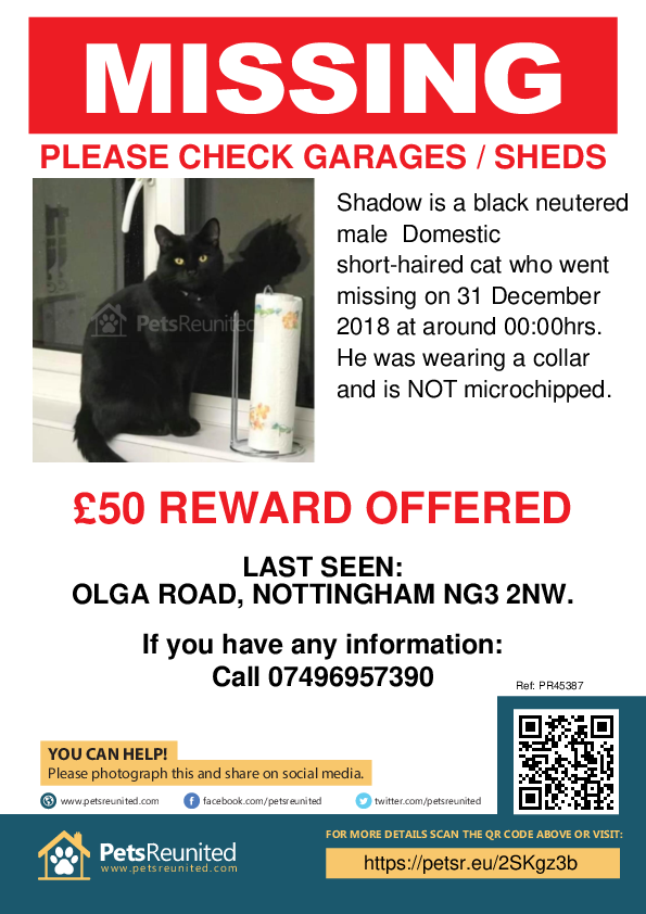 Lost pet poster - Lost cat: Black cat called Shadow